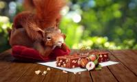 小松鼠和松果甜点角色动画-3d动画制作